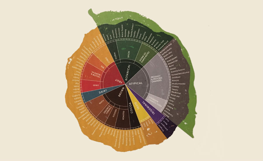 Barry Callebaut flavor wheel