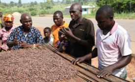 Ivory Coast cocoa farming_Barry Callebaut