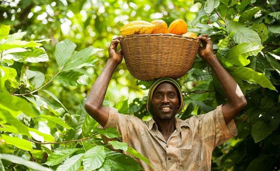 Fairtrade cocoa farmer