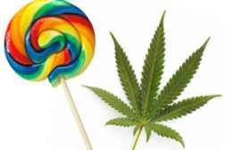 Marijuana vs sugar and candy