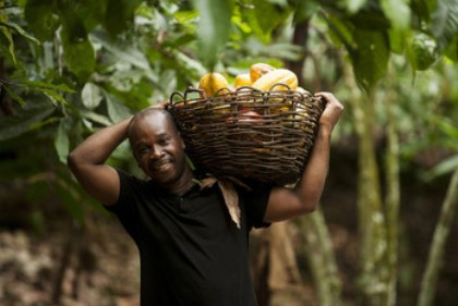 Cocoa farmer Fairtrade
