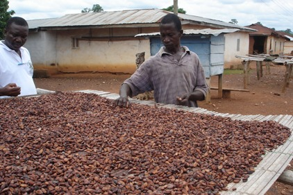 Cocoa Farmer World Cocoa Foundation